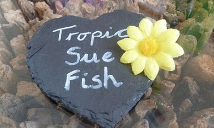 Tropic by Suzi Fish