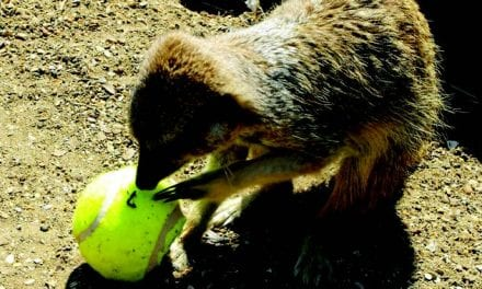Wimbledon Treats Served to Animals at Drusillas Park