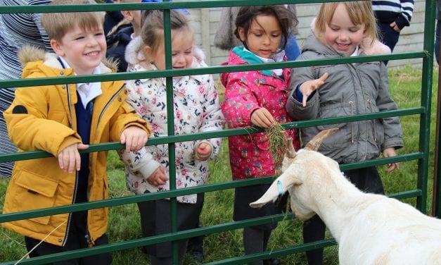 Farmyard Fun and Learning