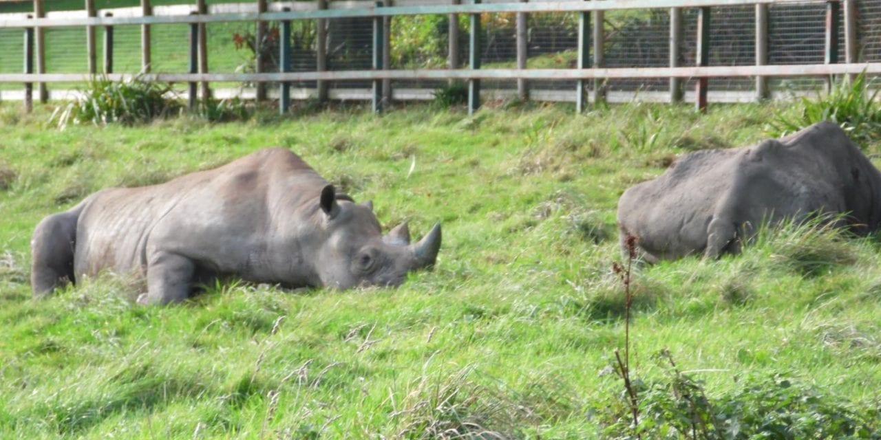 Safari Road Trip For Educational Life Team