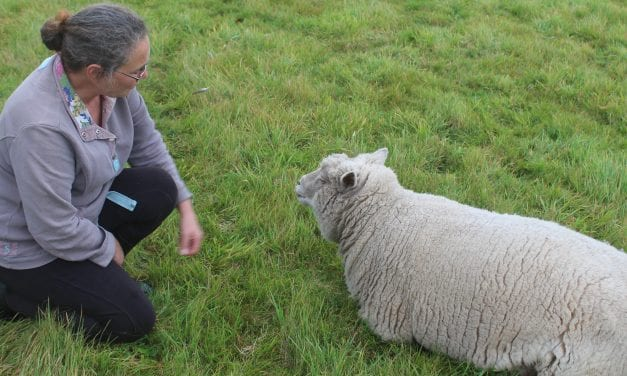 ELVIS LIVES ….. ON A SHEEP SANCTUARY NEAR CANTERBURY
