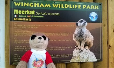 "From the Adventures of Charlie, the Meerkat … ""Wingham Animal Park at Easter"" by Nadia"