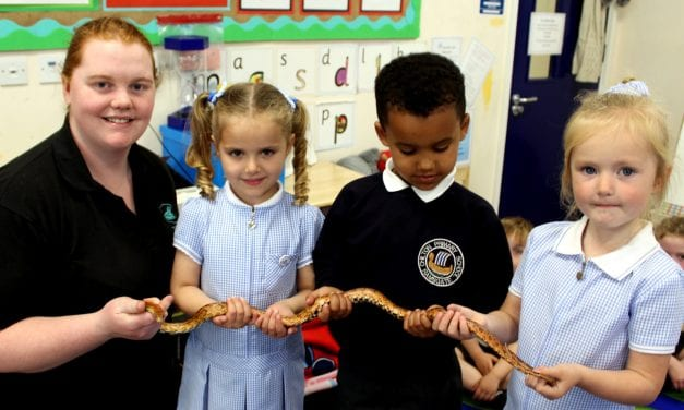 Fascinating Creatures Aid Pupils' Learning